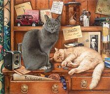 Ginger Grey Tabby Tortoiseshell White Cat Greeting Cards Geoff Tristram Kitten