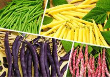 20 Bean Phaseolus Vulgaris Vegetable Seeds Mixed Edible Perennial Plant Bonsai