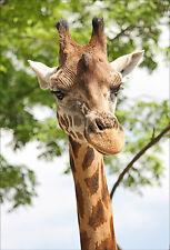 Stickers muraux autocollant déco : Girafe - réf 1315 (16 dimensions)