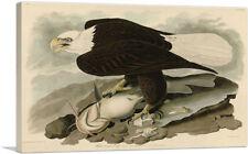 ARTCANVAS Bald Eagle Canvas Art Print by John James Audubon