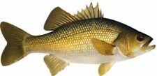 Australian Fish Species Decals