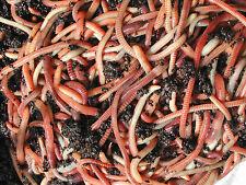 50g -1kg  Dendrobaena Worms Composting Wormeries & Fishing Reptile Food Axolotls