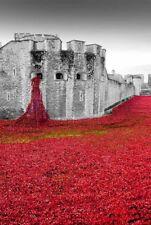 Tower of London poppy poppies Blood Swept Lands photograph souvenir art print