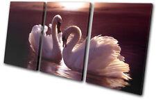 Swans Love Hearts Pink Animals TREBLE TOILE murale ART Photo Print