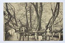 12890 AK Friedhofs Linde Annaberg 1912 Erzgebirge Friedhof