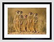 SURICATE MEERKAT FAMILY MONGOOSE BLACK FRAME FRAMED ART PRINT PICTURE B12X9574