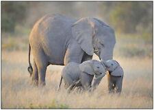 146223 Elephants Wildlife Landscape Wall Print Poster CA