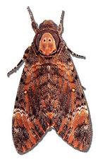 Joke Prank Fun Scary Moth Butterfly - Car or Wall Decal Sticker