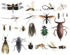 College Level School Entomology Insect Bug Specimens Choose Species Dead Bugs