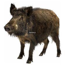 Aufkleber Wildschwein Wildschwein