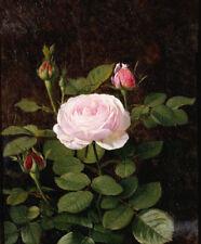 OTTO DIDRIK OTTESEN A Maria Larpin Rose BUDS flower leaf pink CANVAS or PAPER