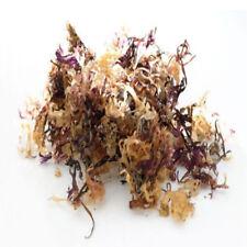 Irish moss Sea Moss Carrageen Chondus Chrispus / Wild Harvested for Cosmetic Use
