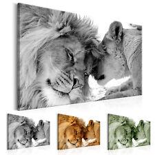 Wandbilder xxl Löwe Tiere Afrika Bild Leinwand Bilder Kunstdruck g-B-0034-b-b