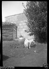 Ancien négatif photo souple - Petit chien dans un jardin