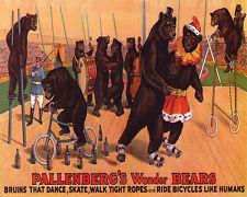 POSTER CIRCUS WONDER BEARS BRUINS DANCE SKATE RIDE BICYCLE VINTAGE REPRO FREE SH