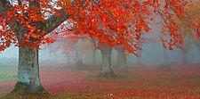 J. A. PALACIOS: Rojo Bosque 804 bastidor de cuña - Imagen Lienzo Árboles Otoño