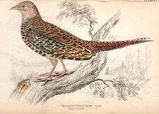 Jardine's Ornathology - H/C -1833- PHASIANUS VERSICOLOR