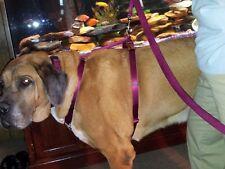 Carter Pet Supply XX Adjustable Dog Harness Mastiff, Saint Bernard, Heavy Duty