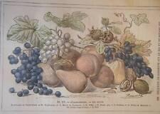 GRAVURE COULEUR DE DEMARLE 1887  LES FRUITS