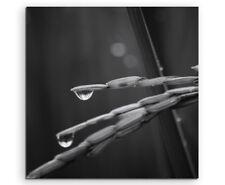 Naturfotografie – Regentropfen auf Reisblatt auf Leinwand