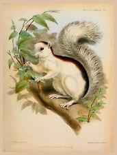 Decor Poster.Home interior design.Room wall print.Sciurus squirrel.Nature.6781