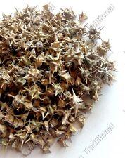 Gokshura Gokhru Puncture Vine Devil's Weed Caltrops Tribulus Terrestris Fruit