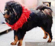 handmade 100% pure Tibetan yak hair wool Tibetan mastiff dog auspicious collar 8