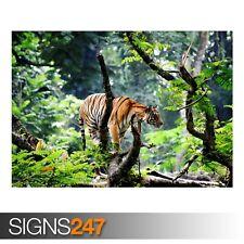 Bengal Tiger En Selva (3352) Cartel impresión arte A1 A2 A3 - 2º Cartel 50% Off!
