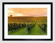 VINEYARD GREEN ORANGE COUNTRYSIDE WINE BLACK FRAMED ART PRINT PICTURE B12X9700