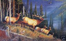 Eagle Mountain Bugler by Terry Doughty Elk Wildlife VCS
