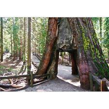 Stickers muraux déco : chemin dans l'arbre 1429