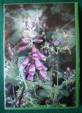 FOXGLOW Feen Grußkarte Fairy Card Mystik Fantasy Magie Digby Curtis