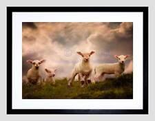 Agnelli Pecore Fattoria Animale Cloud Black Frame incorniciato ART PRINT PICTURE b12x8865