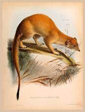 Decor Poster.Home interior design.Room wall print.Somali Mongoose.Nature.6782
