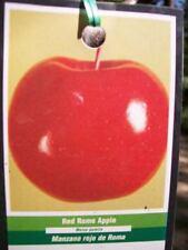 4'-5' RED ROME Apple Fruit Tree 5g Trees Grow Sweet Crispy Apples Garden