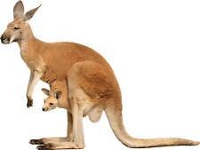 Sticker animal Kangourou 120x90cm