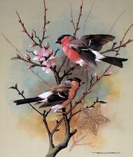 """Vintage Bird Print by Basil Ede * * * 9"""" x 11.5"""" * * * SEE VARIETY"""