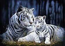 Tigre Blanco, Madre Y Cub Lona Varios Tamaños De Pared Art Poster Print Animal