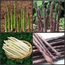 100 Asparagus Officinalis Grass Seeds Mixed Vegetable Edible Plant Home Garden