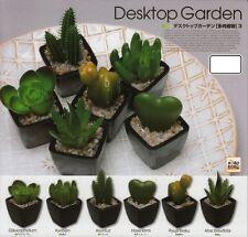 Miniature : Desktop Garden : Succulent 3 - Glaucophyllum Kyobijin Azureus Aloe
