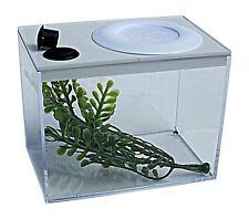 Praying mantis,Tarantula, Spider Mini Vivarium, Insect Box With Feeding Access