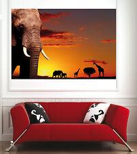 poster poster decorazione da muro Elefante ref 1594295 (6 dimensioni)