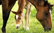 Clearoff naturale cavallo stabile ACARO KILLER gestire & pidocchi trattamento biologico Shield