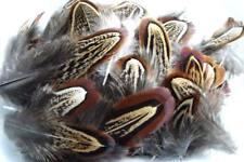 50 plume flanc FAISAN  decoratif extension boucle creation pheasent fasan