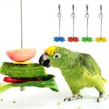 Pet Parrot Fruit Fork Feeding Birds Hang Cage Stainless Steel Parakeet Skewer
