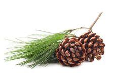 Pine 100% Pure Essential Oil 10ml, 25ml, 50ml, 100ml, 500ml, 1 litre