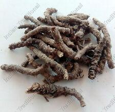 Kutki Root Picrorhiza Kurroa Karu Kadu Kutaki Whole Herb Himalayan Miracle Roots