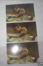 3 vint Dexter Natural Color Chipmunk postcards Vgc