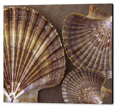 Wall Art Sea Shell Canvas Print Large Earth Tones Beach Decor Horizontal No 7