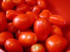 Roma Italian Tomato Seeds, Heirloom, NON-GMO, Variety Sizes, FREE SHIPPING